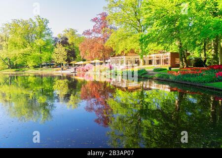 Étang de printemps dans le parc