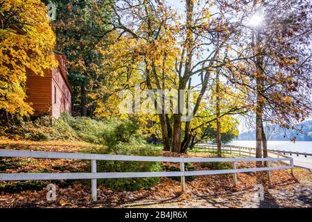 Paysage d'automne avec des arbres noyant dans des feuilles jaunes, clôturé avec une couverture blanche, enveloppant le domaine et le soleil se brisant dans les branches de t Banque D'Images