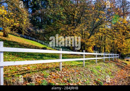 Paysage d'automne avec des arbres de fleurs noyant dans des feuilles jaunes, clôturé avec une couverture blanche, enveloppant le domaine et le soleil se brisant à travers la branche Banque D'Images