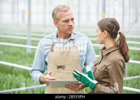 Taille vers le haut portrait du travailleur mûr utilisant une tablette numérique tout en instruisant le jeune stagiaire dans la plantation de serre