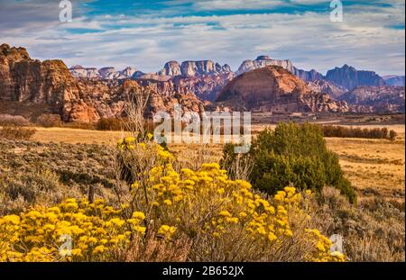 Floraison de rabbitbrush dans Cave Valley, Tabernacle Dome, West Temple et Mount Kinesava en dist, de Kolob Terrace Road, Zion National Park, Utah, États-Unis Banque D'Images