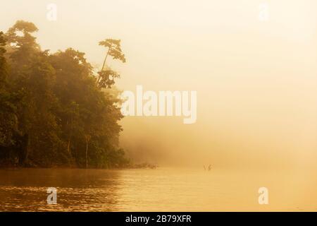 Plus tôt le matin, lever du soleil sur la rivière Kinabatangan dans la forêt pluviale du district de Sabah, Bornéo, Malaisie Banque D'Images