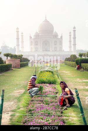 Agra, UTTAR PRADESH, INDE - 24 FÉVRIER 2015 : Indiens travaillant dans le jardin du complexe Mehtab Bagh devant le Taj Mahal Banque D'Images