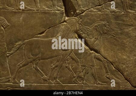 Chevaux assyriens pendant la campagne du roi Ashurbanipal contre Élam, dépeint dans le relief assyrien du Palais Ashurbanipal du roi à Nineveh daté de 645 avant J.-C. exposé au Musée du Louvre à Paris, France. Banque D'Images