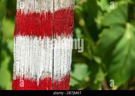 Le panneau blanc et rouge du sentier touristique peint sur l'arbre. Les feuilles vertes sont en arrière-plan. Banque D'Images