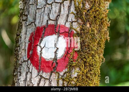 Le panneau rond blanc et rouge du sentier touristique peint sur l'arbre avec de la mousse. Les feuilles vertes sont en arrière-plan. Banque D'Images