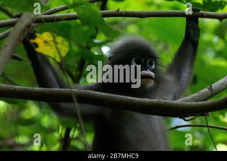 Lunettes dans les arbres de la péninsule dans les arbres de Railay en Thaïlande