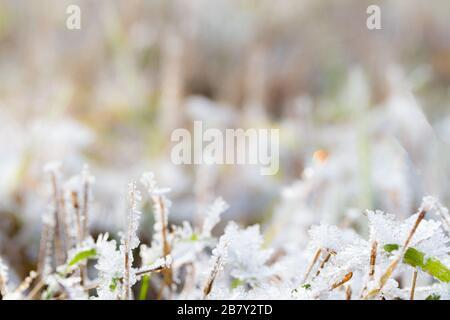 Le gel sur l'herbe à la fin de l'automne à la lumière du jour. Banque D'Images