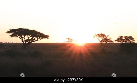 coucher de soleil et arbres à acacia au parc national du serengeti en tanzanie