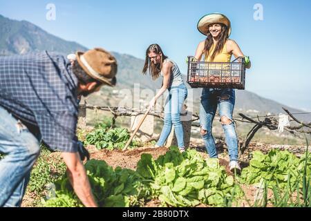 Travail d'équipe récolte des légumes frais dans le jardin communautaire de serre - jeunes heureux au travail ramasser des aliments végétariens biologiques - se concentrer sur la pompon Banque D'Images