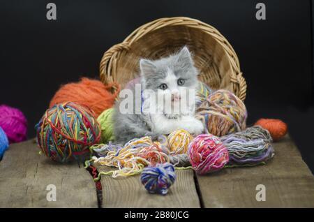 Joli chaton avec boule de fil sur fond noir. Cat jouant avec une boule de fil. Joli chaton de 12 semaines jouant avec une balle de laine Banque D'Images