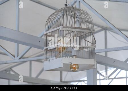 Deux ampoules Edison à l'intérieur du pare-soleil en cage d'oiseaux en bois peint blanc. Gros plan de cage à oiseaux réutilisé dans la lampe de plafond avec ampoules dorées. Banque D'Images