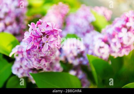 fleur naturelle Banque D'Images