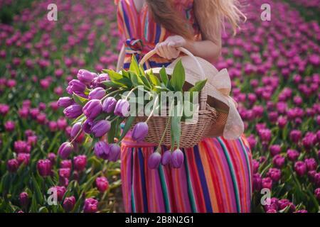 Paysage magique des Pays-Bas avec une belle femme de cheveux rouge vêtue d'une robe rayée. Fille tenant bouquet coloré tulipes fleurs dans le panier et