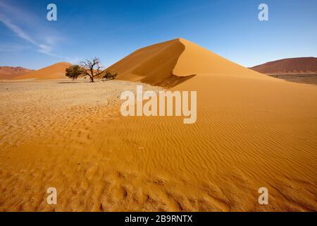 Dune 45 dans la région de Sossusvlei, Namib Naukluft Park, Namibie