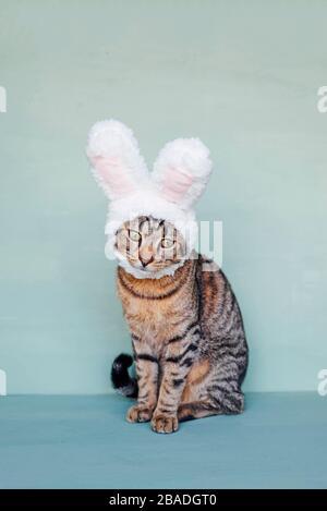 Jeune chat européen Shorthair portant des oreilles de lapin drôle.