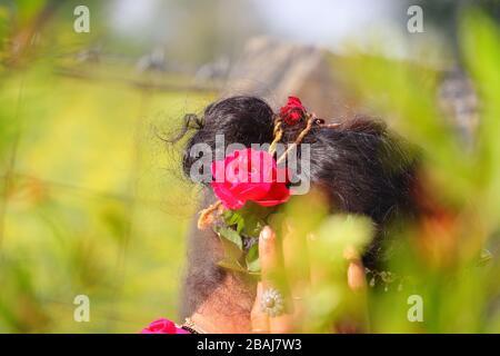 découpez le foyer de la rose rouge sur la tête des femmes avec un fond vert flou de nature