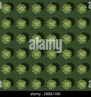 Modèle régulier et créatif de plantes succulentes de cactus vert avec des ombres dures sur fond vert. Motif fleuri en toile de fond. Plat, vue du dessus.