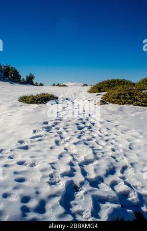 paysage horizontal d'un chemin sur la neige qui nous conduit au sommet de la montagne peñalara à segovia une journée ensoleillée avec un ciel bleu clair