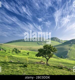 Paysage rural avec amande et champs verts cirrus paysage nuageux en Sicile