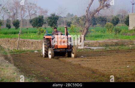 Un agriculteur pline son champ dans le district de Mardan, dans la province de KPK, au Pakistan. Banque D'Images