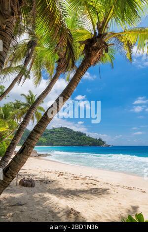 Plage tropicale ensoleillée des Caraïbes