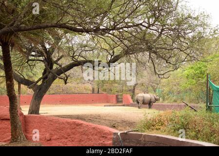 Photos du parc animalier des Rhinoceros indiens dans le parc zoologique