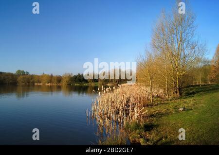 Royaume-Uni, Yorkshire du Sud, Barnsley, réserve naturelle d'Elsecar