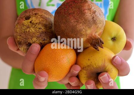 Femme tenant des fruits frais d'automne biologiques dans ses mains/ saine alimentation/ mode de vie sain Banque D'Images