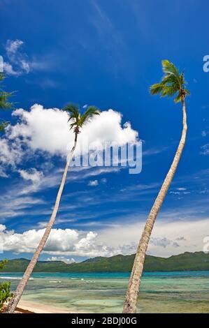 Deux palmiers à noix de coco sur la plage des Caraïbes en République dominicaine Banque D'Images