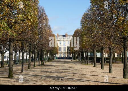 PARIS - 7 NOVEMBRE 2019: Jardin des Tuileries avec des lignes d'arbres dans un automne ensoleillé à Paris, perspective Banque D'Images