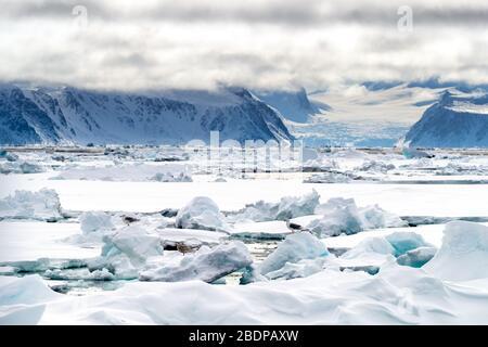 Piquet dans le cercle arctique à 80 degrés au nord, avec les montagnes et les glaciers de Svalbard dans le fond et les goélands sur la glace au premier plan