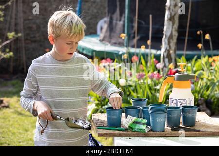 Un garçon de 9 ans qui empotait des plantes végétales dans son jardin arrière le printemps, Angleterre, Royaume-Uni Banque D'Images
