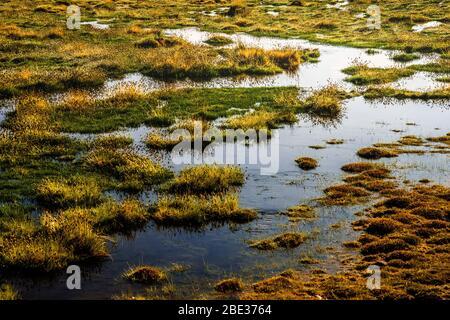 Putana River Wetland, désert d'Atacama, Chili