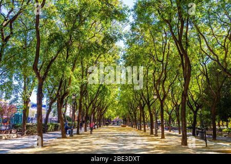 Allée bordée d'arbres dans le parc du Prado de San Sebastián à Séville, Andalousie, Espagne