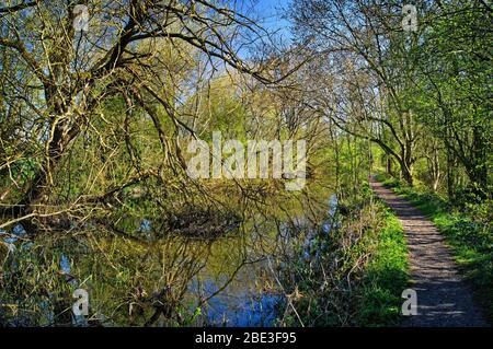 Royaume-Uni, Yorkshire du Sud, Barnsley, canal Elsecar et sentier pédestre