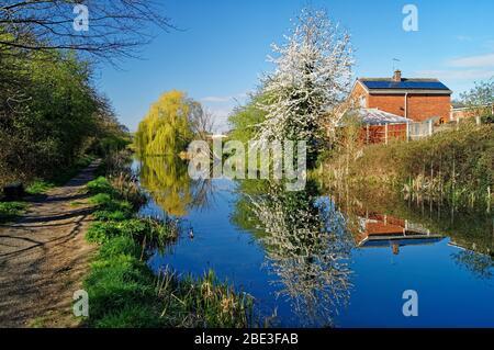 Royaume-Uni, Yorkshire du Sud, Barnsley, canal Elsecar et sentier avec Blossom en pleine floraison