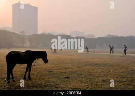 matin brouillard à kolkata maidan Banque D'Images