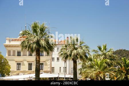 Palmier et de vieux bâtiments à Riva street à Split, Croatie