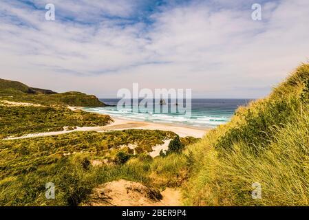 Panorama sur la baie de Sandfly, la péninsule d'Otago, Dunedin, Otago, Nouvelle-Zélande Banque D'Images