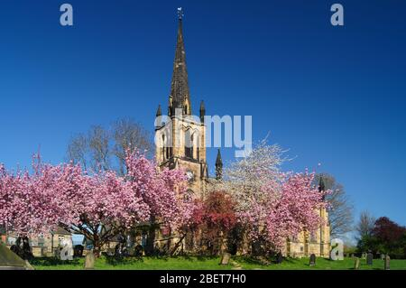 Royaume-Uni, Yorkshire du Sud, Elsecar, église paroissiale de la Sainte Trinité au printemps avec cerisier Blossom en pleine floraison