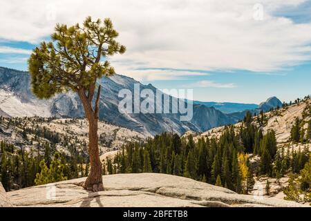 Vue depuis Olmsted point de l'environnement naturel du parc national de Yosemite avec le Half Dome en arrière-plan
