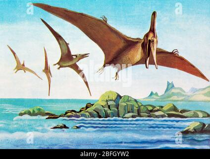 Pteranodon, ptérosaure, ancien reptile, dinosaure, animal préhistorique
