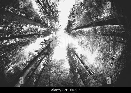 Fond paysage noir et blanc Banque D'Images