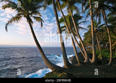 Première beauté légère le long de la côte de Puna bordée de palmiers sur la Grande île d'Hawaï.