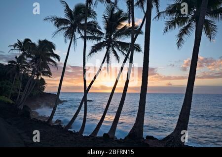 Lever du soleil silhouettes le littoral de Puna borde le palmier sur la Grande île d'Hawaï.