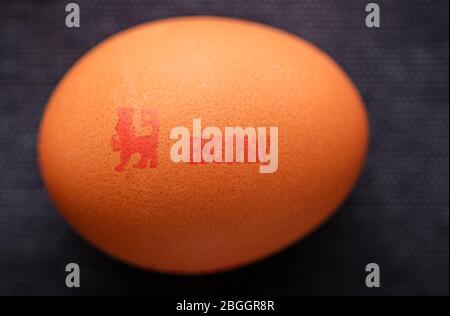 Le Lion britannique a marqué le logo de la marque de qualité des œufs sur un œuf. Banque D'Images