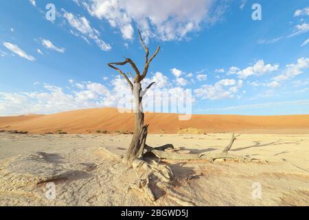 Deadvlei est un pan de l'argile blanche situé près de la plus célèbre marais salant de Sossusvlei, l'intérieur de la parc de Namib Naukluft en Namibie. Banque D'Images