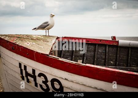 Un mouette perchée sur un bateau de pêche sur la plage de galets d'Aldborough Banque D'Images