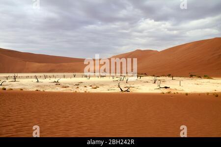 Namibie, plateau de Sossusvlei entouré de dunes désertiques Banque D'Images